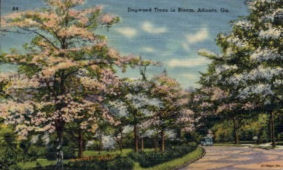 Dogwood in Bloom - Atlanta, Georgia GA Postcard