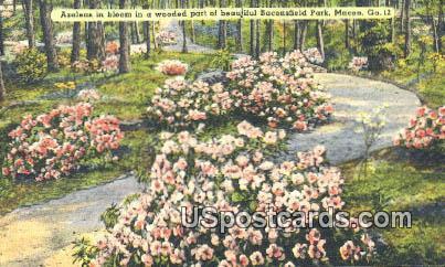 Baconsfield Park - Macon, Georgia GA Postcard