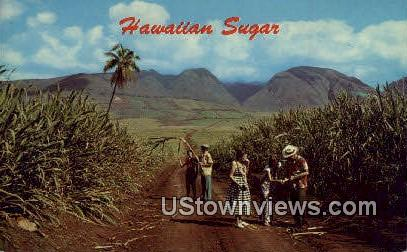 Sugar Fields - Hawaii Postcards, Hawaii HI Postcard