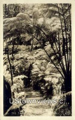 Tree Ferns, Real Photo - Hawaiian Islands Postcards, Hawaii HI Postcard