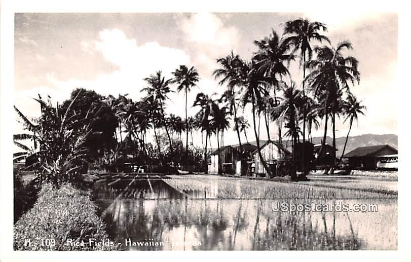 Rice Fields - Hawaiian Islands Postcards, Hawaii HI Postcard