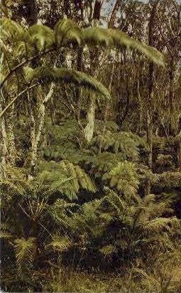 Fern Forests - Kilauea, Hawaii HI Postcard