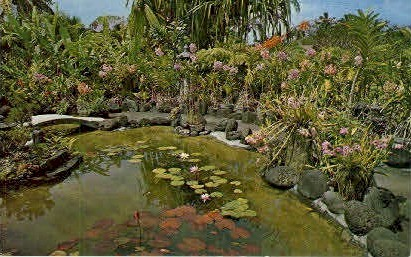 Kong's Floraleigh Gardens - Hilo, Hawaii HI Postcard