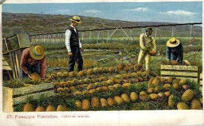 # 97 Pineapple Plantation - Hawaiian Islands Postcards, Hawaii HI Postcard