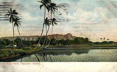 # 74 Rice Field - Hawaiian Islands Postcards, Hawaii HI Postcard