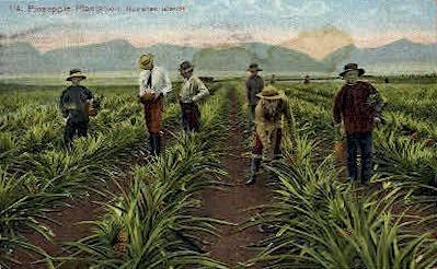 #114 Pineapple Plantation - Hawaiian Islands Postcards, Hawaii HI Postcard