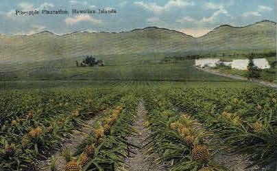 Pineapple Plantation - Hawaiian Islands Postcards, Hawaii HI Postcard