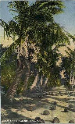 Cocoanut Palms - Hawaii Postcards, Hawaii HI Postcard