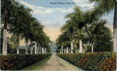 Royal Palms - Hawaii Postcards, Hawaii HI Postcard