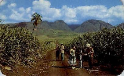 Sugar Fields - Maui, Hawaii HI Postcard