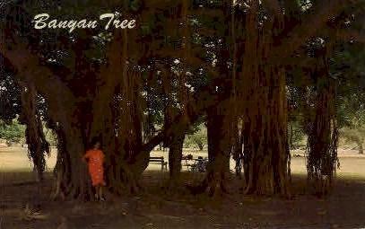Banyan Tree, Lahaina - Maui, Hawaii HI Postcard