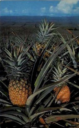 Pineapple - Hawaii Postcards, Hawaii HI Postcard