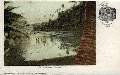 # 50 Cocoanut Grove - Hawaiian Islands Postcards, Hawaii HI Postcard