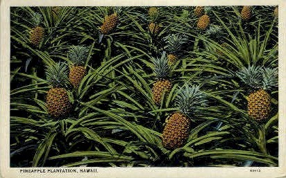 Pineapple Plantation - Hawaii Postcards, Hawaii HI Postcard