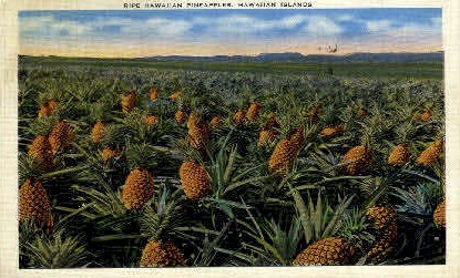 Ripe Hawaiian Pineapple - Hawaiian Islands Postcards Postcard
