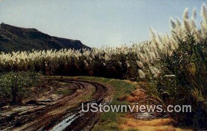 Sugar Cane Fields - Hawaiian Islands Postcards, Hawaii HI Postcard