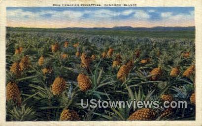 Pineapple Harvesting - Hawaiian Islands Postcards, Hawaii HI Postcard