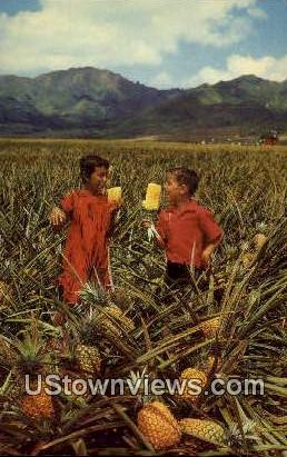 Field Ripe Pineapples - Hawaii Postcards, Hawaii HI Postcard