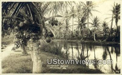 Cocoanut Grove, Real Photo - Hawaiian Islands Postcards, Hawaii HI Postcard