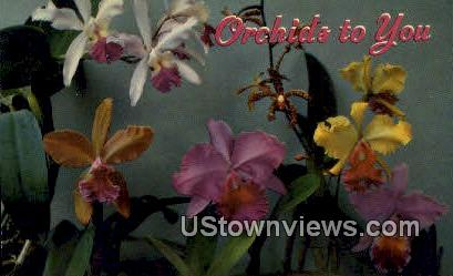 Orchids to You - Hawaii Postcards, Hawaii HI Postcard