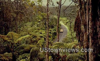 Fern Forest - Kilauea, Hawaii HI Postcard