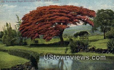 Poinciana Tree, Moanalua Park - Hawaiian Islands Postcards, Hawaii HI Postcard