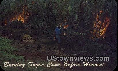 Burning Sugar Cane - Hawaii Postcards, Hawaii HI Postcard