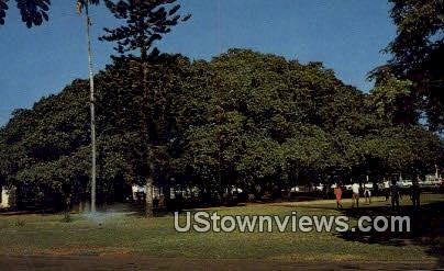 Banyan Tree - Hawaii Postcards, Hawaii HI Postcard