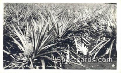 Pineapple Field - Hawaiian Islands Postcards, Hawaii HI Postcard