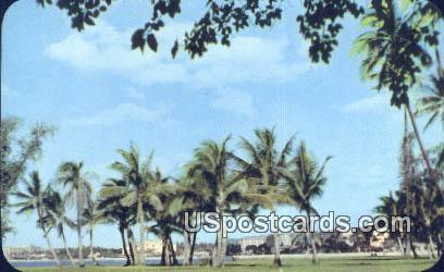 Coconut Palms - Waikiki, Hawaii HI Postcard