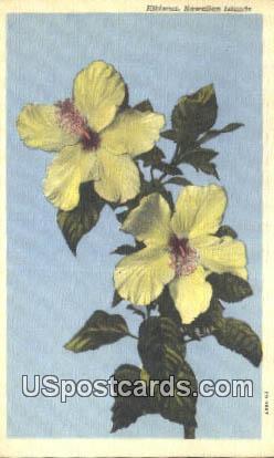 Hibiscus - Hawaiian Islands Postcards, Hawaii HI Postcard