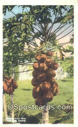 Papaia Fruit Tree - Hawaiian Islands Postcards, Hawaii HI Postcard