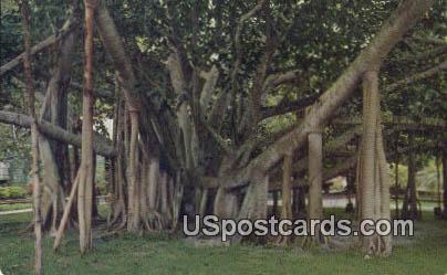 Banyan Tree - Honolulu, Hawaii HI Postcard