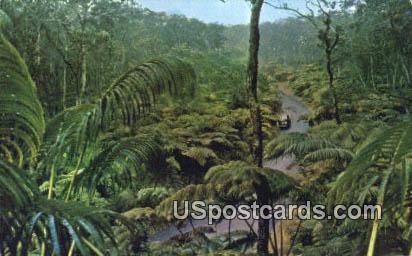 Fern Forest - Hawaiian National Forest Postcards, Hawaii HI Postcard