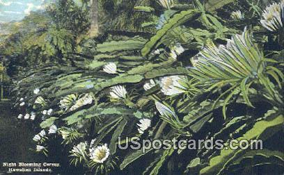 Cereus - Hawaiian Islands Postcards, Hawaii HI Postcard