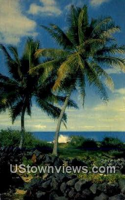Cocopalm in Kona - Hawaii HI Postcard