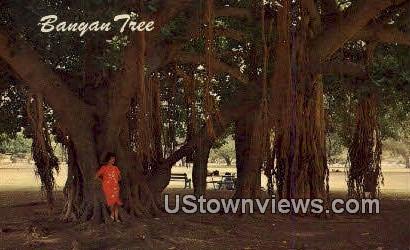 Banyan Tree - Maui, Hawaii HI Postcard
