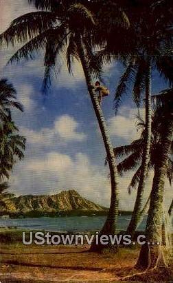 Tree Climber - Waikiki, Hawaii HI Postcard