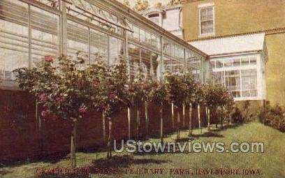 Grafted Tree Roses - Fejeuary Park - Davenport, Iowa IA Postcard