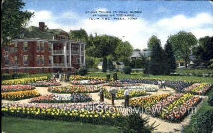 27,000 Tulips In Full Bloom - Pella, Iowa IA Postcard