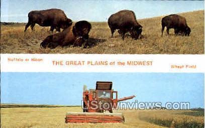Buffalo or Bison - Misc, Iowa IA Postcard