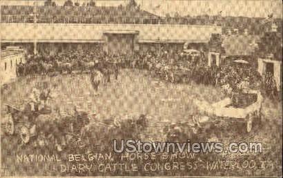 National Belgian Horse Show - Waterloo, Iowa IA Postcard