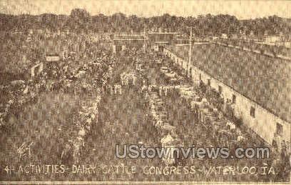 Dairy Cattle Congress - Waterloo, Iowa IA Postcard
