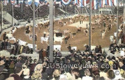 Parade Of Champion Cattle - Waterloo, Iowa IA Postcard
