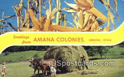 Amana Colonies - Iowa IA Postcard