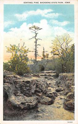 Sentinel Pine IA