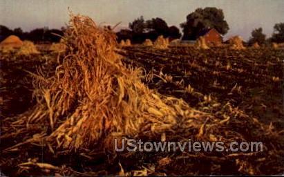 Golden Harvest - Sioux City, Iowa IA Postcard