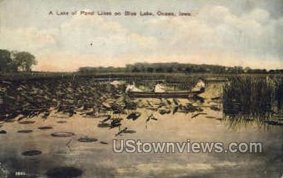 A Lake of Pond Lilies - Onawa, Iowa IA Postcard
