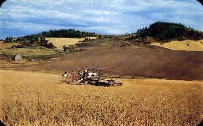 Land of the Palouse - Misc, Idaho ID Postcard
