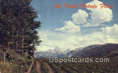 Raising Potatoes - Misc, Idaho ID Postcard
